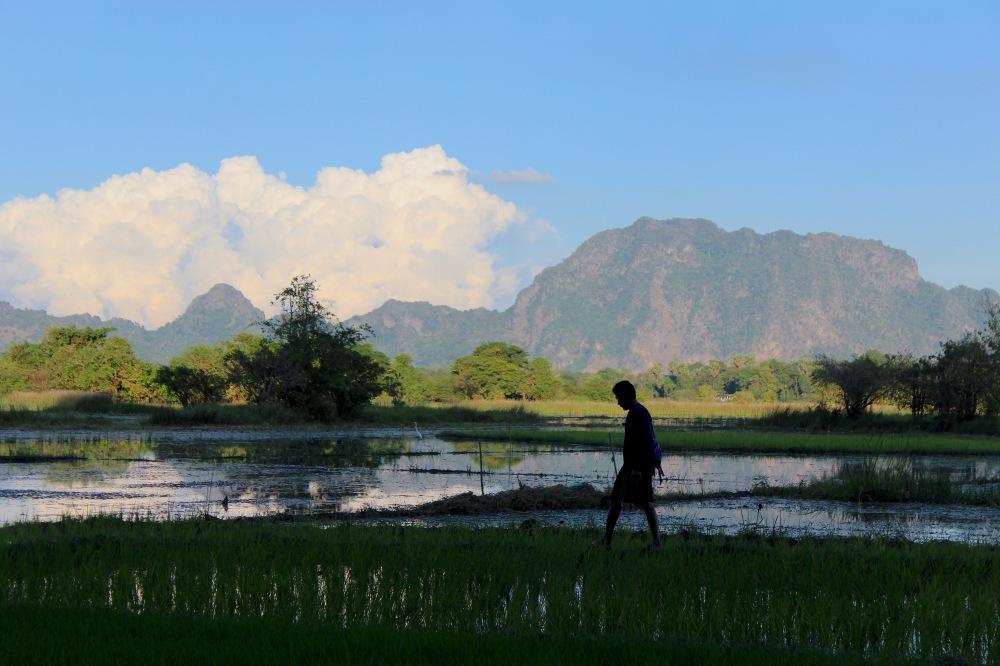 Marcheur dans rizière