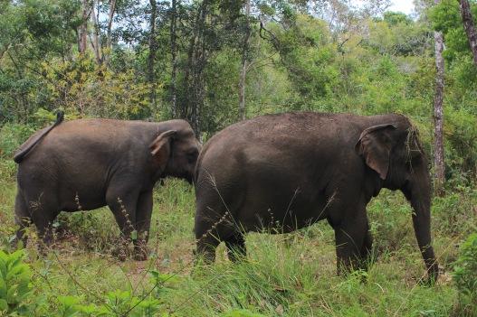 Deux éléphants