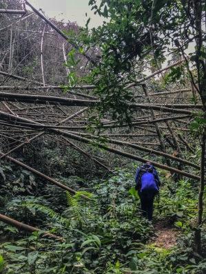 Au milieu des bambous.JPEG
